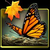 App Icon: Season Zen HD 1.9.1