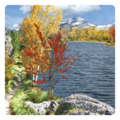 App Icon: Herbst Live Wallpaper