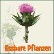 App Icon: essbare Pflanzen / Kräuter APP