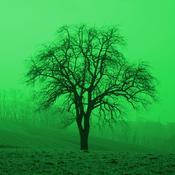 App Icon: Baumbestimmung 2.31