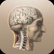 App Icon: Klassische Anatomie