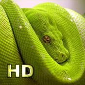 App Icon: iSnakes HD 1.0