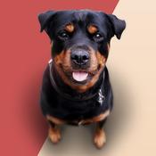 App Icon: Hunde Bellen
