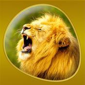 App Icon: Animals 360 Gold 6.0
