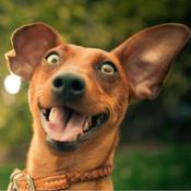 Lustige Bilder AndroidApp mit Fotos zum Lachen  AndroidApp  CHIP